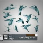 مجموعه براش پرندگان با بال های گوهرین